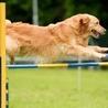 Dog Training Pros