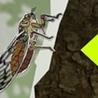 EntomoScience