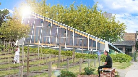 Urban Farming Now Includes Vineyards! - Organic Connections | Environmental Innovation | Scoop.it