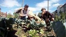 On te plante des choux, est-ce que ça te dit? | #Etika Mondo news | Scoop.it