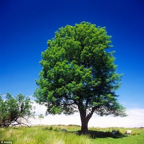 BBSRC mention: Could 'Betty' save our forests? | BIOSCIENCE NEWS | Scoop.it