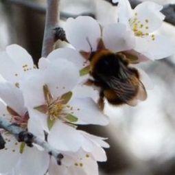 Sin abejas no hay paraiso | Bichos en Clase | Scoop.it
