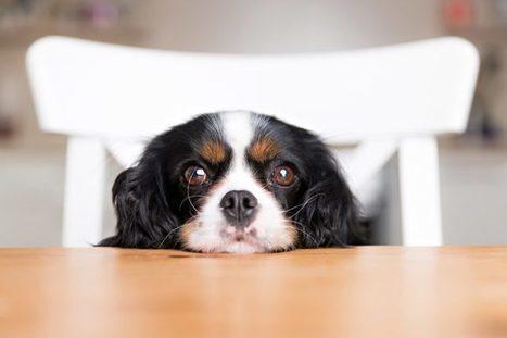 Le Xylitol, un édulcorant très toxique pour les chiens | Toxique, soyons vigilant ! | Scoop.it