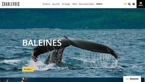 Comment optimiser les images sur votre site web | Le Pays des Impressionnistes: l'actu pour les pros ! | Scoop.it