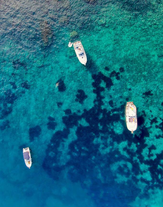 ENVIRONNEMENT: Révolution digitale et protection de la biodiversité, le duo gagnant pour une Méditerranée exemplaire d'ici 2030