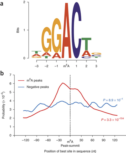 Transcriptome-wide mapping of N6-methyladenosine by m6A-seq based on immunocapturing and massively parallel sequencing : Nature Protocols : Nature Publishing Group | Plant Genomics | Scoop.it