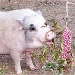 Using enrichment to modify behavior - Pt 2   Pedegru   Animals Make Life Better   Scoop.it