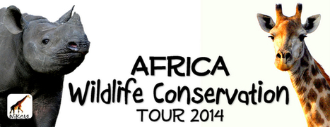 2014 Wildlife Conservation Trip to Africa | Nikela: Stop the Rhino Poachers - Don't buy wildlife products | Rhino poaching | Scoop.it