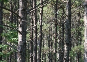 Molpus Woodlands Group to Acquire 73,000 Acres in Alabama | Timberland Investment | Scoop.it
