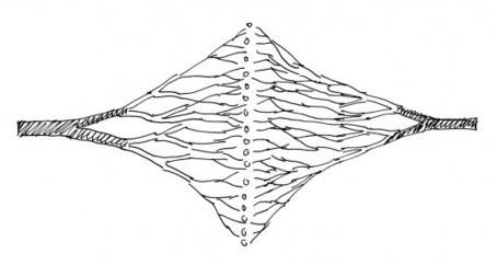 The Network City - biourbanism.org | Darwinian Ascension | Scoop.it