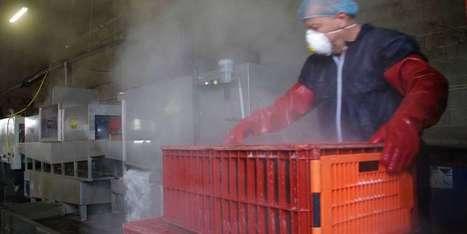 Grippe aviaire: une lessiveuse de caisses à canards en Bergeracois | Agriculture en Dordogne | Scoop.it