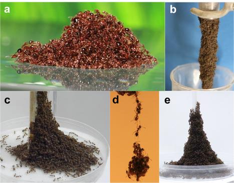 Ants clutch each other to build an amazing life raft - Futurity   Avant-garde Art, Design & Rock 'n' Roll   Scoop.it