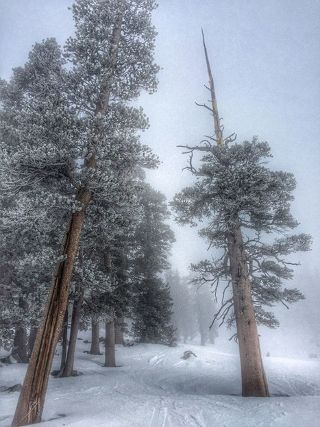 30 Wonderful Winter Photos Taken With An iPhone   Backlight Magazine. Photography and community.   Scoop.it