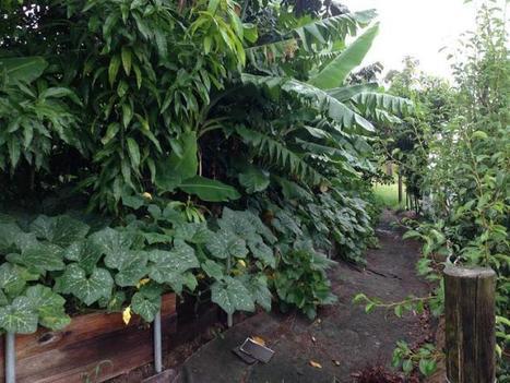 Australianos producen alimentos para 50 familias en apenas 4000 metros cuadrados | Permacultura y autosuficiencia | Scoop.it