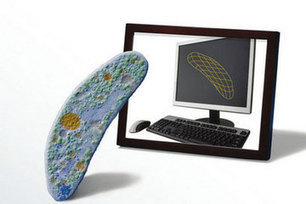 Digital Evolution: DNA May Bring Computers to Life | Conciencia Colectiva | Scoop.it