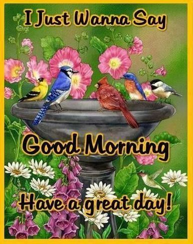 Good Morning Birds Video Art Images Picture