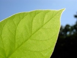 Artificial Photosynthesis Project Aims to Create Hydrogen Fuel | social geography | Scoop.it