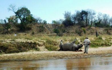 Vietnamese NGO condemns rhino poaching - Eyewitness News | Kruger & African Wildlife | Scoop.it