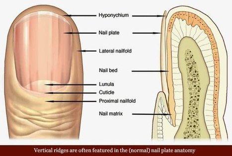 8 Health WARNINGS Your Fingernails May Be Sending | Funteresting Stuff | Scoop.it