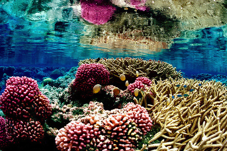 Coral reefs are producing a chemical that staves off global warming - Grist   My Funny Africa.. Bushwhacker anecdotes   Scoop.it
