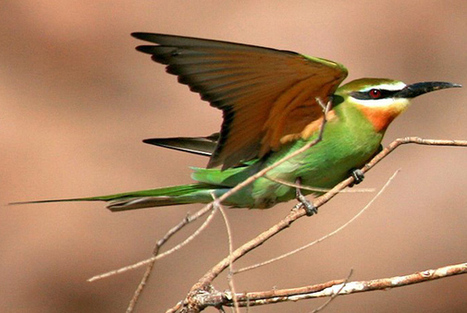 Birdwatching in Le Marche | Le Marche another Italy | Scoop.it