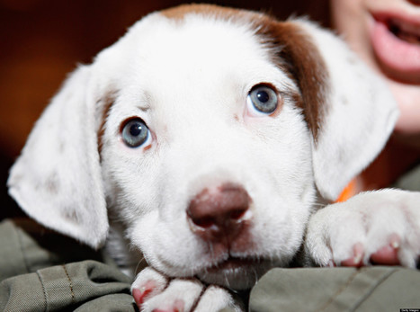 10 Dog Names That Are Losing Popularity | It's Show Prep for Radio | Scoop.it