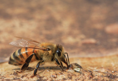 The by in it abeilles' Blog's Revue OlivierSCScoop 29IEDHWY