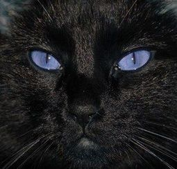 Beautiful Black Cats | Cats Rule the World | Scoop.it