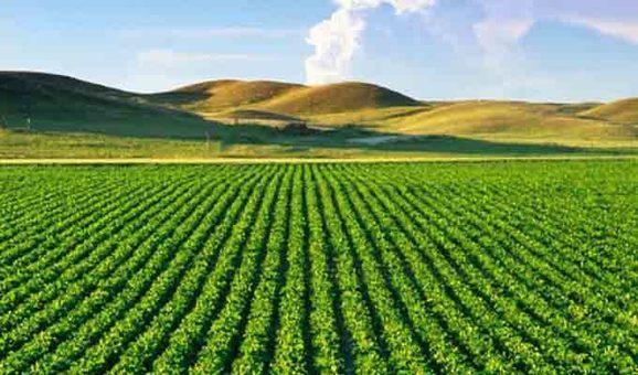 Politiques agricoles et dépendances alimentaires en Afrique du Nord en débat à Tunis