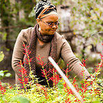 Urban Gardens Grow Everything Except Gardeners | Community Gardening | Scoop.it