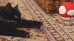 Ce chat évolue dans l'univers de Super Mario Bros   CaniCatNews-actualité   Scoop.it