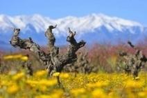 Les vendanges sont terminées dans la région et c'est l'heure des ... - RTS FM La Radio du Sud   Le vin quotidien   Scoop.it