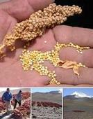 Quinoa, a catalyst for innovation - CIRAD | Plant Gene Seeker -PGS | Scoop.it
