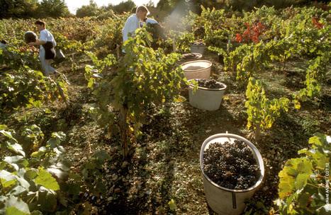 Les vignobles de l'Aveyron | L'info tourisme en Aveyron | Scoop.it