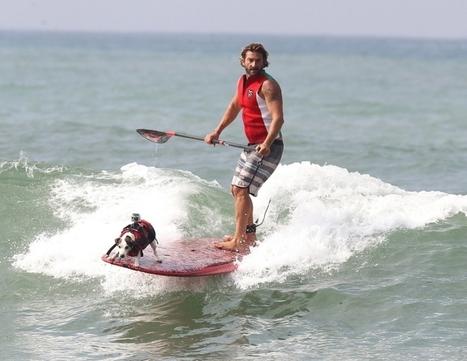 Biarritz : un surfeur et son chien, champions de France | CaniCatNews-actualité | Scoop.it