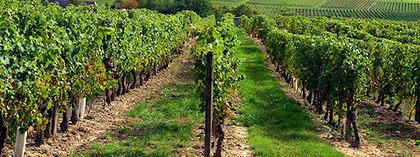Vignoble de Touraine   Vins de Loire   Scoop.it