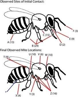 Varroa destructor Mites Can Nimbly Climb from Flowers onto Foraging Honey Bees | World Environment Nature News | Scoop.it