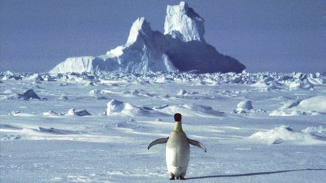 Attention morons: Antarctica a great place to die | Antarctica | Scoop.it