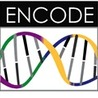 The ENCODE
