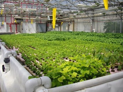 SchoolGrown: Is Aquaponics the Next Big Thing in Education? | Aquaponics in Action | Scoop.it