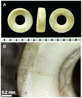 GB : An Integrated Approach to the Taxonomic Identification of Prehistoric Shell Ornaments | World Neolithic | Scoop.it