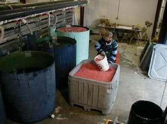 Aquaculture jobs in Alaska: now this IS exciting! | Alaska salmon's Blog | AQUA Jobs | Scoop.it