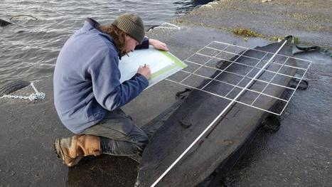 Log boat dating back 4500 years found in Lough Corrib - Irish Times | Bronze Age | Scoop.it