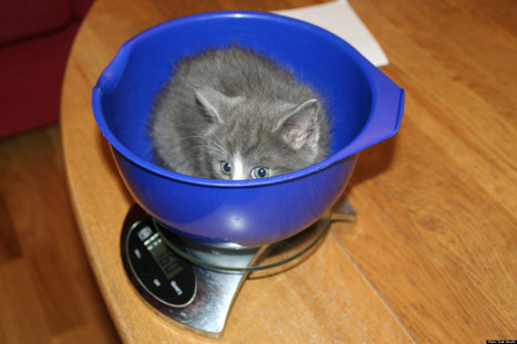 Cute Cat Photos: In Bowls, Pots And Pans (PHOTOS)   Kittens and Cats   Scoop.it