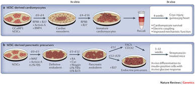 Pluripotent stem cells in regenerative medicine: challenges and recent progress : Nature Reviews Genetics | Tissue  and organ Engineering and Manufacturing | Scoop.it