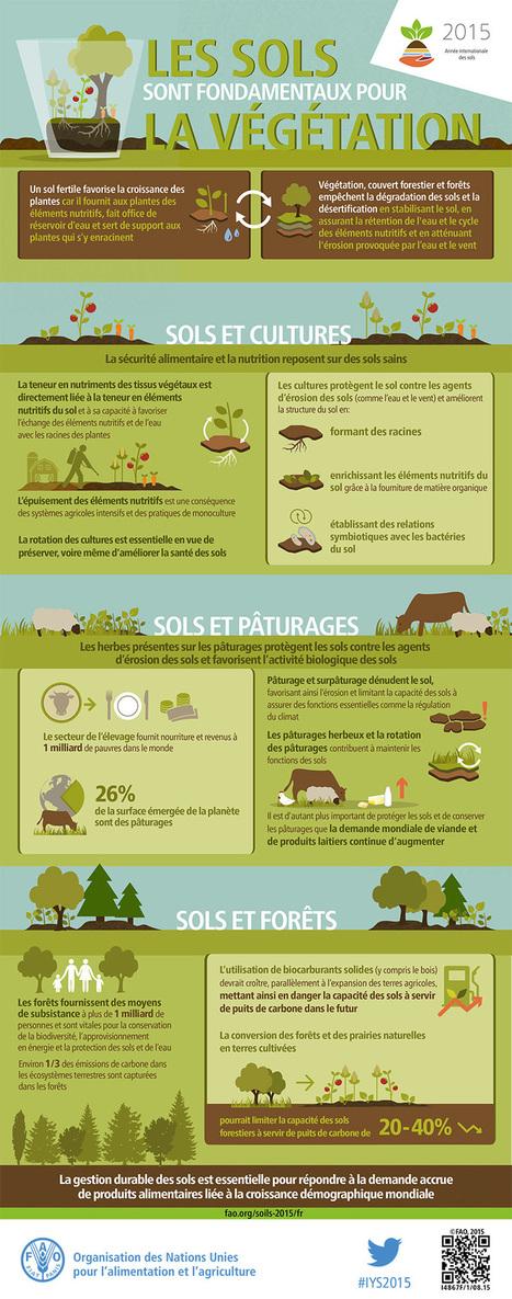 Les sols sont fondamentaux pour la végétation | pour mon jardin | Scoop.it
