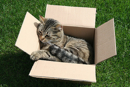Moving With Cats – A Guide on How to Move House With a Cat | Cats Rule the World | Scoop.it