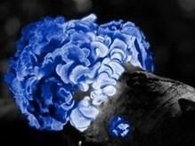 Troquer ses ampoules contre des plantes lumineuses  | SoonSoonSoon.com | Développement durable & Environnement | Scoop.it
