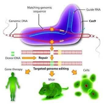 El sistema CRISPR/Cas, premio Princesa de Asturias de la Ciencia 2015 | microBIO | Scoop.it