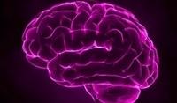 """Hirnforscher: """"Wir haben einen freien Willen""""   Intuition   Scoop.it"""
